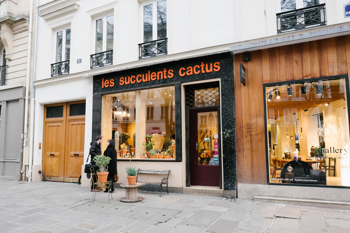 anne et ses succulents cactus hoodspot journal. Black Bedroom Furniture Sets. Home Design Ideas